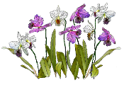 Tallit - Orchids